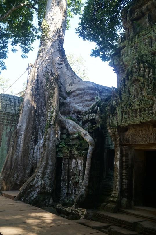 camb tree